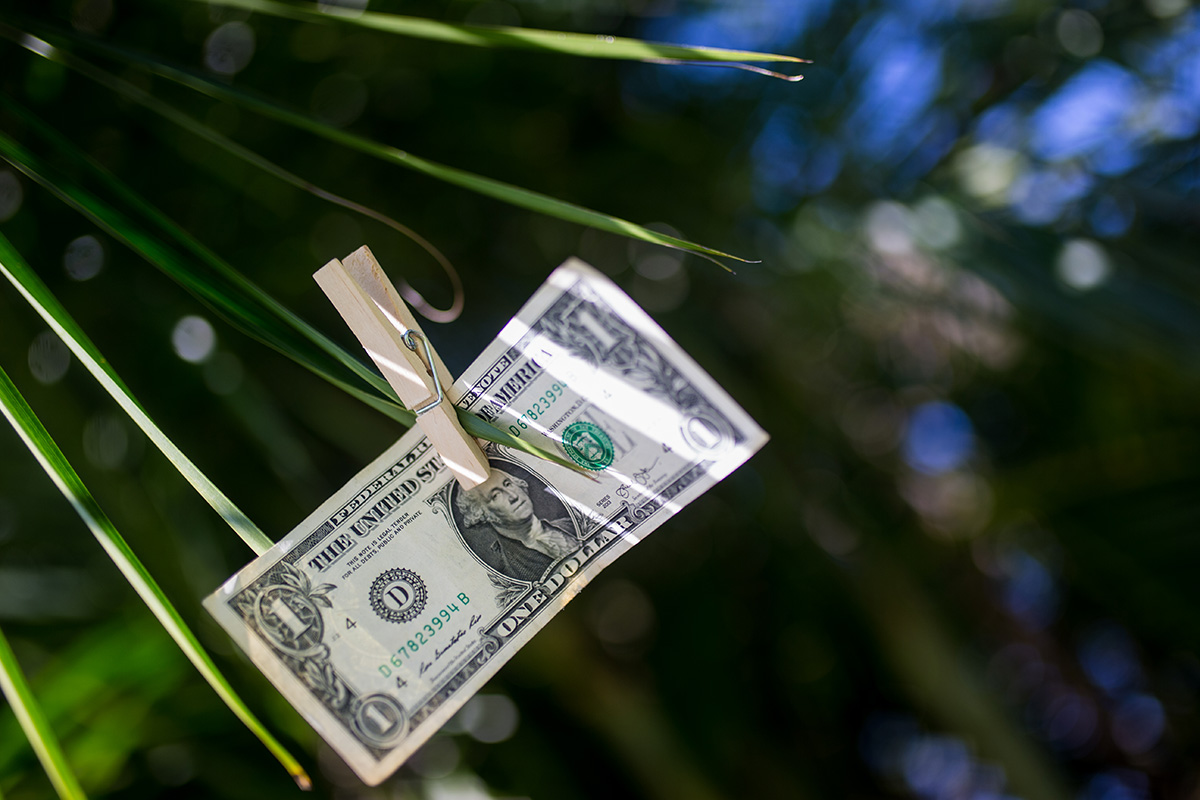 A dollar bill hangs from the leaf of a plant.