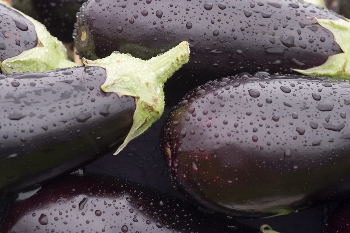 A bundle of freshly washed eggplants to cut and cook in the oven.