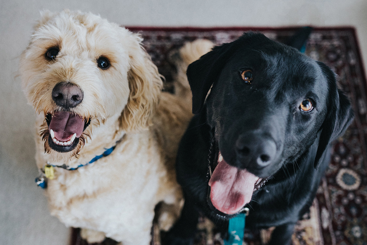 two dogs looking up at camera