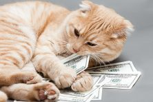 cat chewing hundred dollar bills