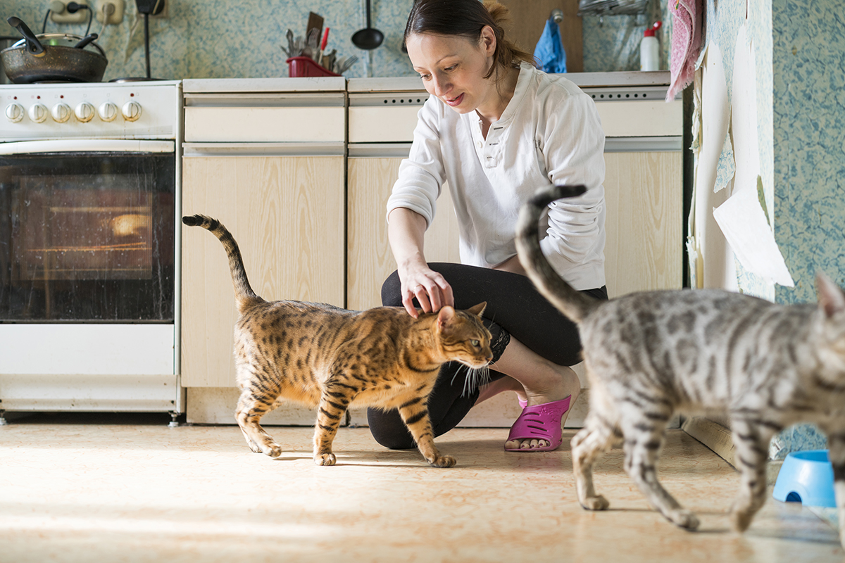 Young woman with two Bengal cats in the kitchen