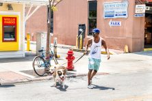Man in baseball cap walking his dogs in front of a Wells Fargo Bank in the Florida Keys.