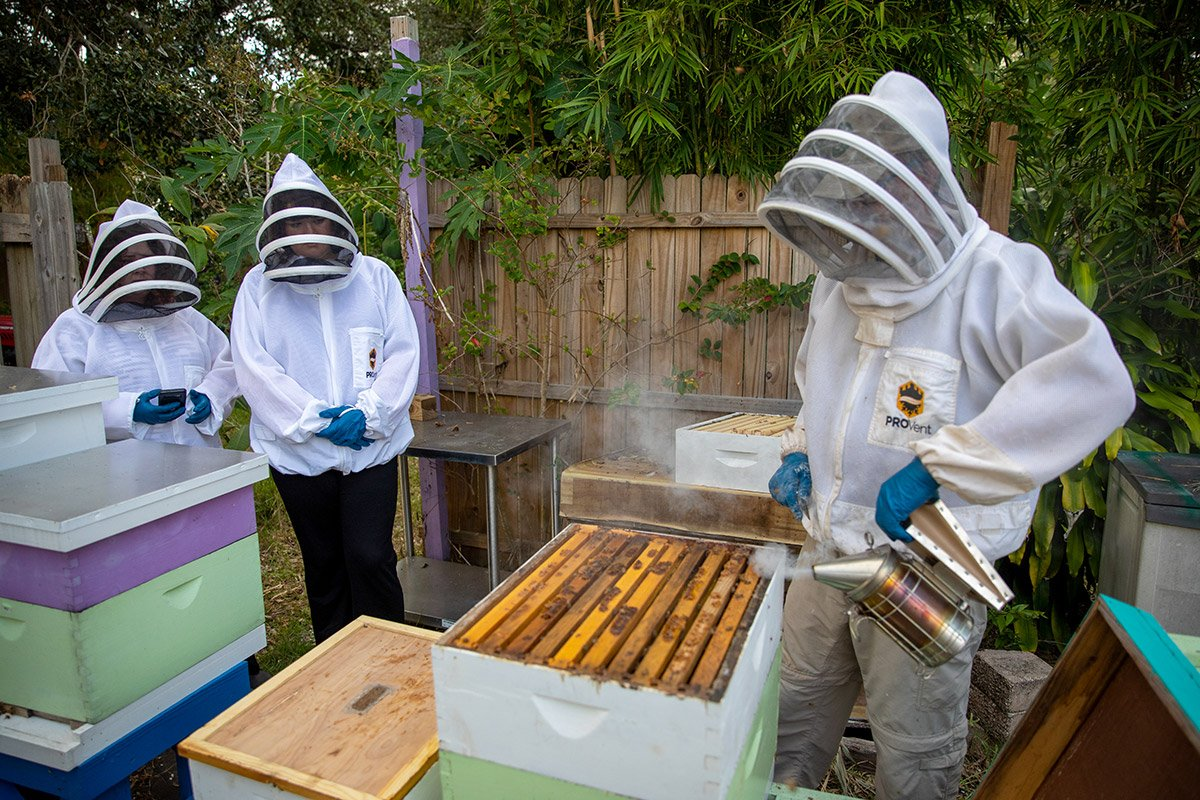 A beekeeper shows his bee hives to visitors.