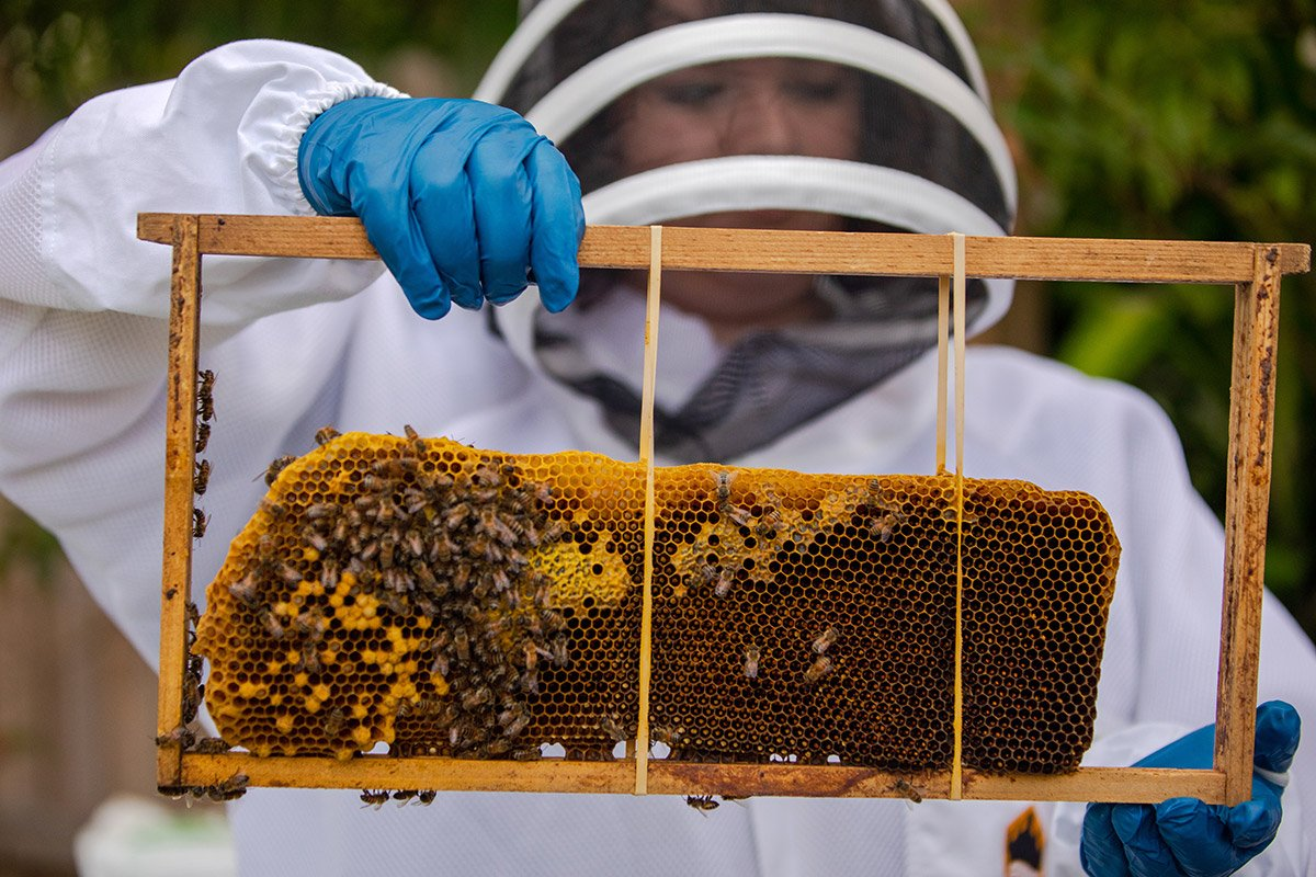 A young woman holds a beehive.