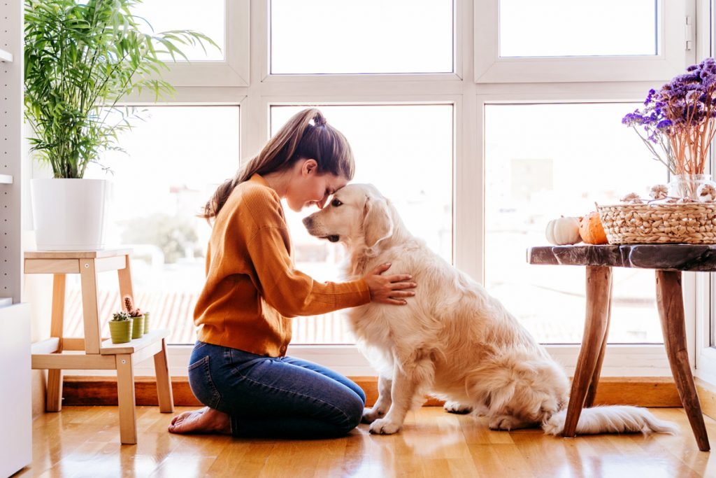 6 Easy Ways to Pet-Proof Your Furniture, According to Experts